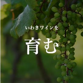 いわきワインを育む